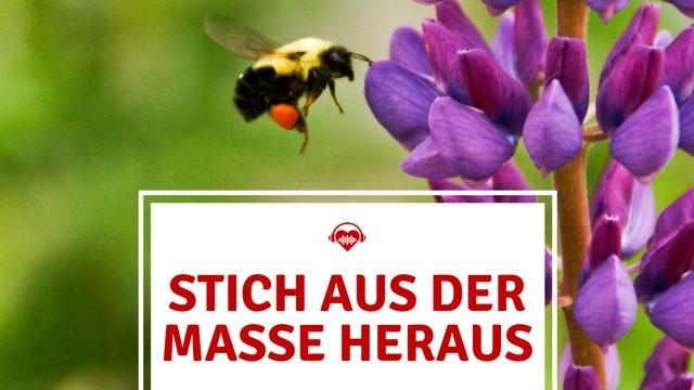 Festival Gadgets Biene heraus stechen